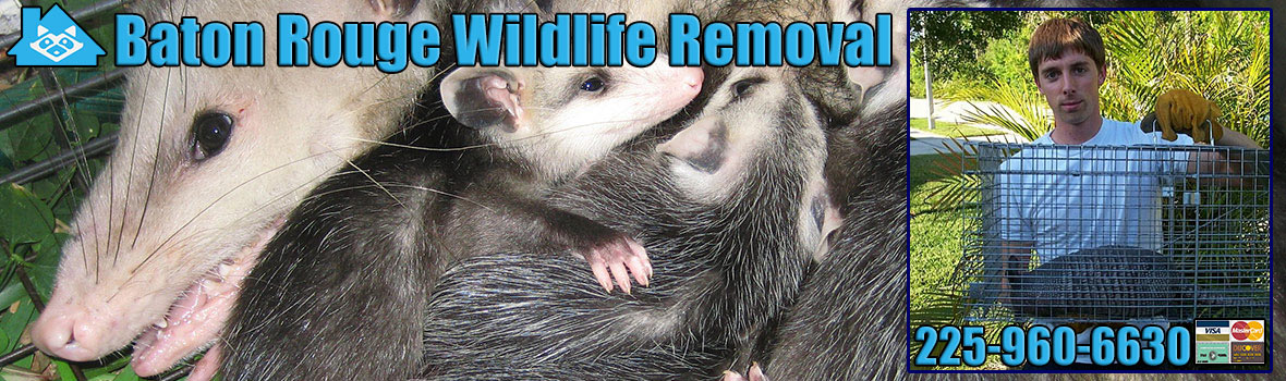Baton Rouge Wildlife and Animal Removal